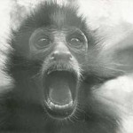 Primate screaming. Courtesy of New Old Stock Photography