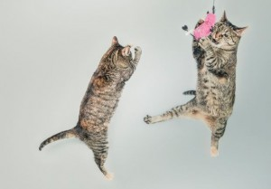 Two cats playing with a pink balloon, demonstrating the importance of play. Courtesy of gratisography.