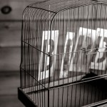 Image of the word bird in a birdcage, from gratisography.com